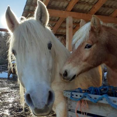 Pferdeoffenstall und Boxen mit Herdenverband - thumb