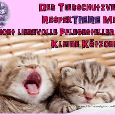 Pflegestelle für katzen - thumb