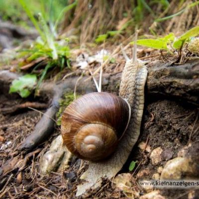 Biogrund zu pachten gesucht - thumb