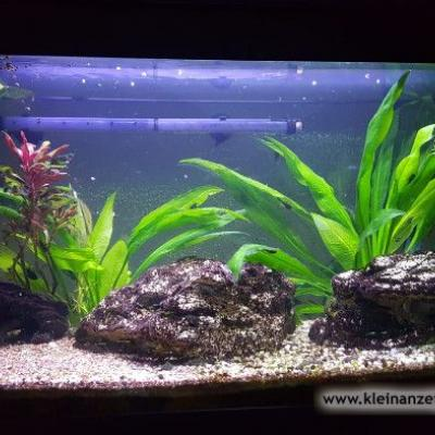 Komplettes Aquarium mit Fischen - thumb