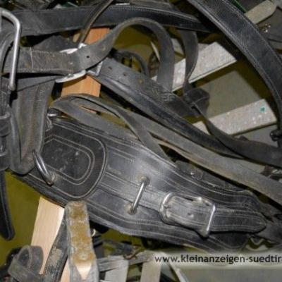 Pferdegeschirr für Norikerpferde - thumb