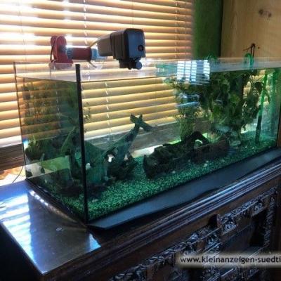 Aquarium (160 Liter), samt hochwertigem Zubehör - thumb