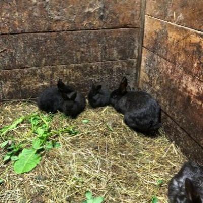 Kaninchen zu verschenken - thumb