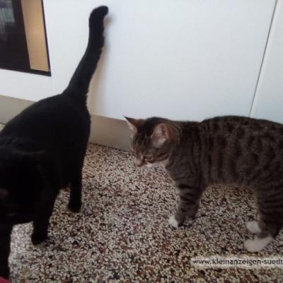 zwei Katzen - thumb