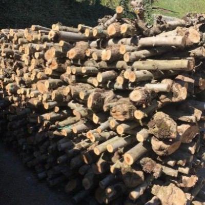 Apfelbaumholz Meterware trocken - thumb