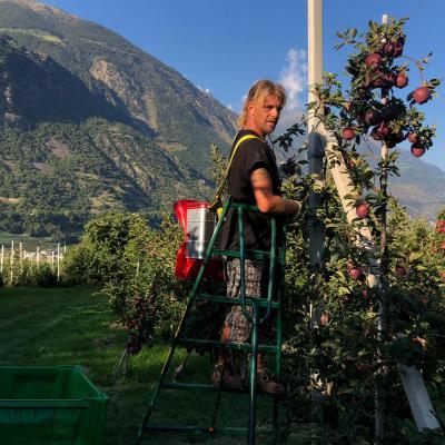 Erfahrener Erntehelfer mit Wohnmobil sucht Arbeit - thumb