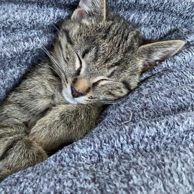 Suche 2. Kätzchen - thumb