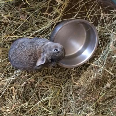 Junge Kaninchen zu verschenken - thumb