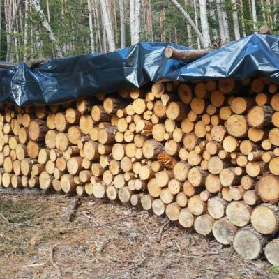 Brennholz günstig zu verkaufen Raum Eisacktal Lajen - thumb
