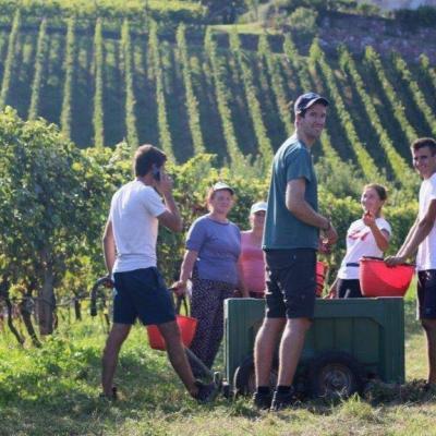 Mitarbeiter im Weinbau gesucht - thumb
