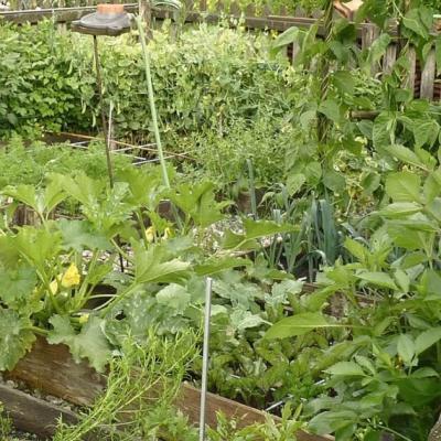 Grundstück für Gemüse/Obstanbau - thumb