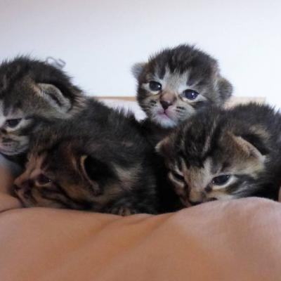 Kätzchen zu verschenken - thumb