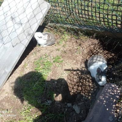 Kleine Hasen zu verschenken - thumb