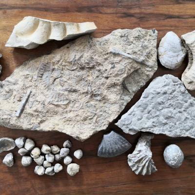Fossilien und Mineralien - thumb