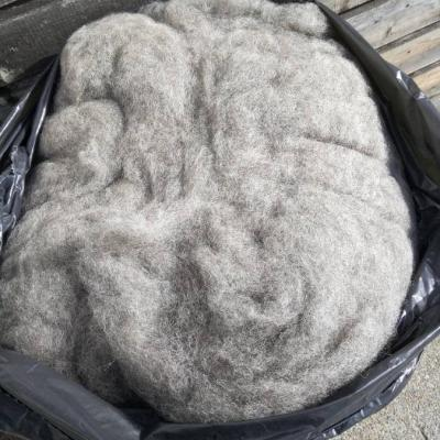 Ausgemachte Schafwolle zum Spinnen - thumb