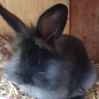 Junge Kaninchen gegen freiw. Spende abzugeben - thumb