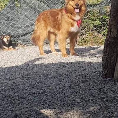 Mischlingshunde - thumb