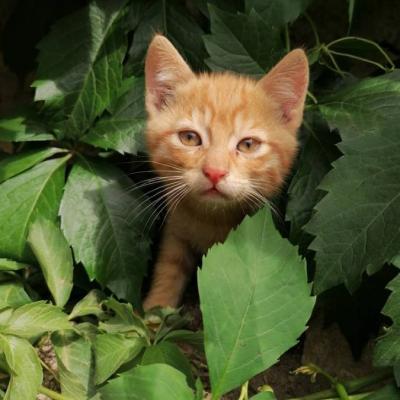 Süße Babykatzen zu verschenken - thumb