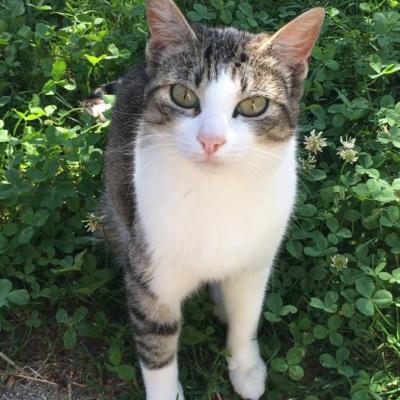 Katze Ronja in Eppan abgängig - thumb