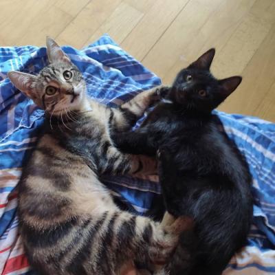 2 junge Katzen - thumb