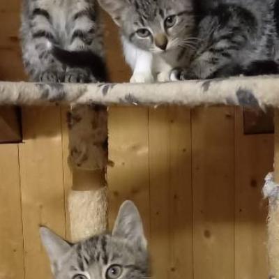 Auch diese Kätzchen - thumb