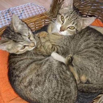 2 junge Kätzchen - thumb