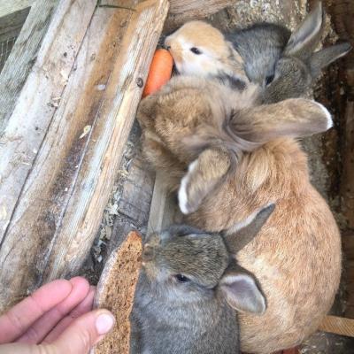 Zwerg Kaninchen Babies 🐇 - thumb
