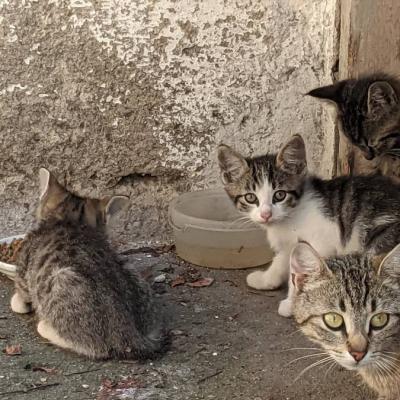 Kleine Kätzchen zu verschenken - thumb