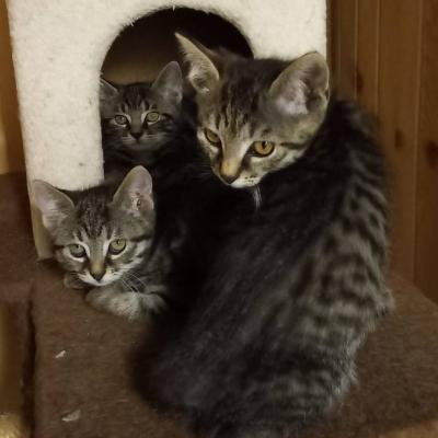 Katzenmamma mit 3 jungen - thumb
