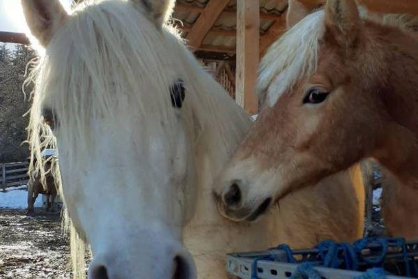 Pferdeoffenstall und Boxen mit Herdenverband