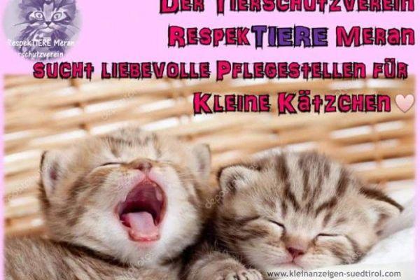 Pflegestelle für katzen