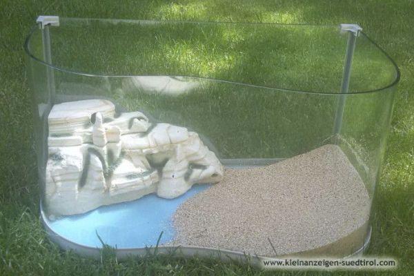 Terrarium für Salamander oder Schildkröten