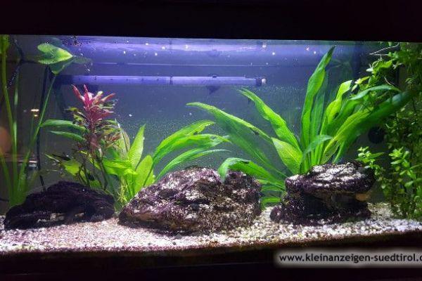 Komplettes Aquarium mit Fischen