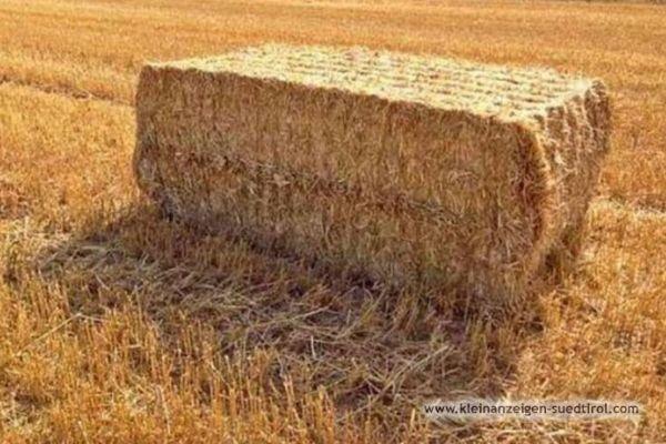 Stroh Weizenstroh Einstreu 15€/dt