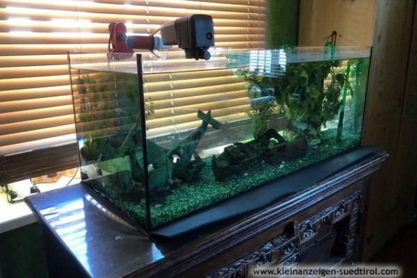 Aquarium (160 Liter), samt hochwertigem Zubehör