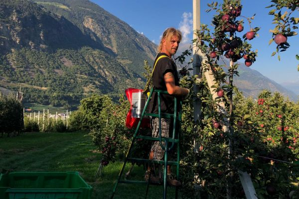 Erfahrener Erntehelfer mit Wohnmobil sucht Arbeit