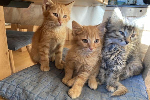 Katzen zu verschenken