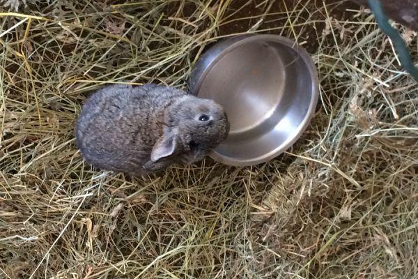 Junge Kaninchen zu verschenken
