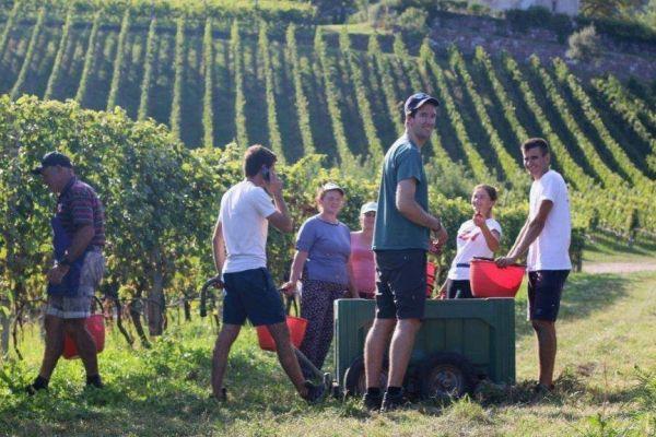 Mitarbeiter im Weinbau gesucht