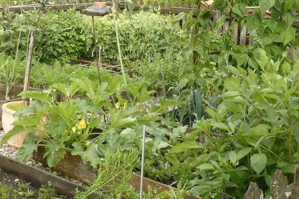 Grundstück für Gemüse/Obstanbau
