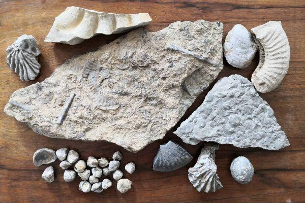 Fossilien und Mineralien