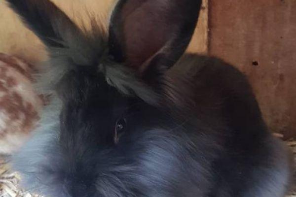 Junge Kaninchen gegen freiw. Spende abzugeben