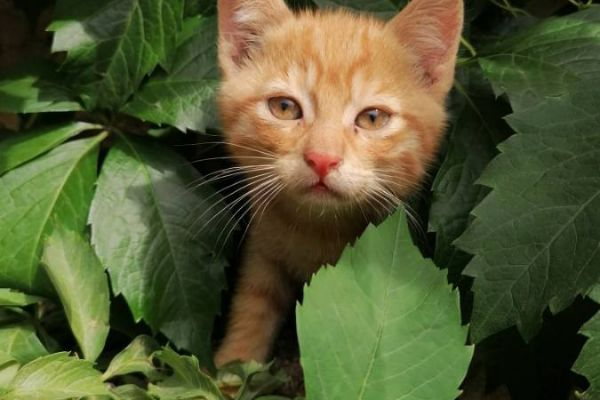 Süße Babykatzen zu verschenken