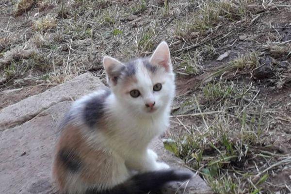 3 kleine dreifarbige Kätzchen zu verschenken