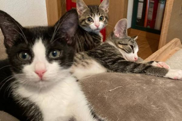 Diese jungen Kätzchen