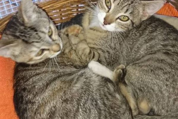 2 junge Kätzchen