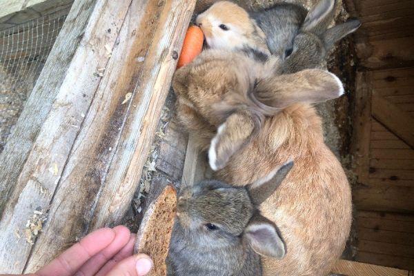 Zwerg Kaninchen Babies 🐇