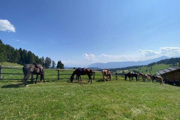 Reitbeteiligung/Pflefepferd